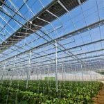 Serra Fotovoltaica Quanto si Guadagna e I prezzi